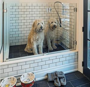 hogar-modular-apto-para-mascotas-vida modular 4